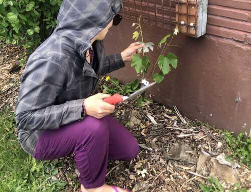 Favas, Figs, and Fun